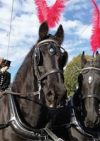 Acorn Carriage Hire