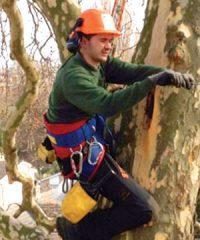 D Parr Tree Surgeons