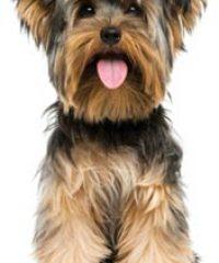 Rest Assured Home & Pet Care