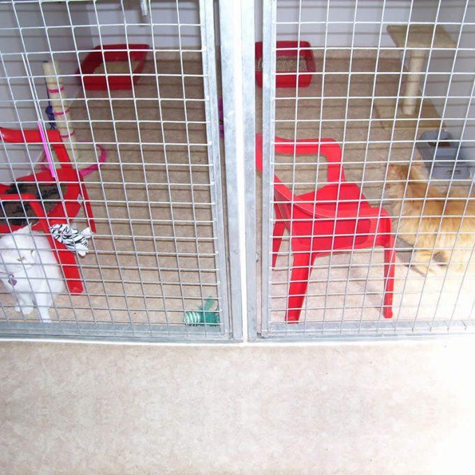 Manston Boarding Kennels & Cattery